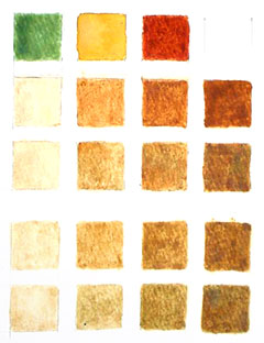 Color chart of a flesh tint continuum