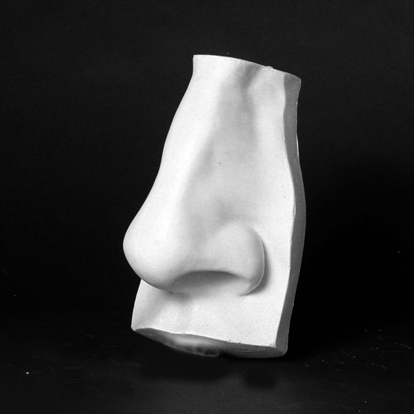 Drawing Plaster Cast: Human Nose